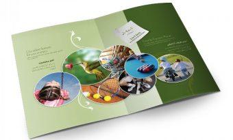 Các bước để thiết kế in brochure hiệu quả